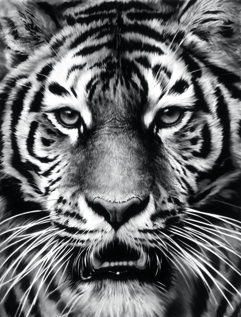 Robert_Longo_Tiger